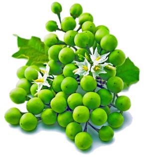 eierpflanze gemüse kreuzworträtsel